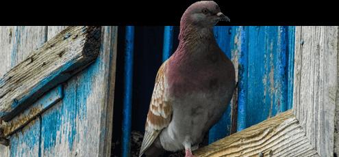 Bird Control Mumbai